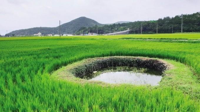 '고성 해안지역 둠벙 관개시스템' 국가중요농업유산 지정