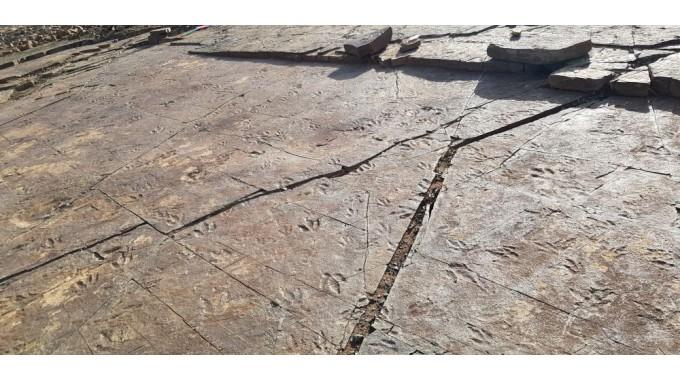 진주 뿌리산단 공룡발자국 대량 발견...사업차질 우려