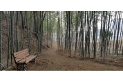 함양 필봉산 자락에 대나무 숲길 조성